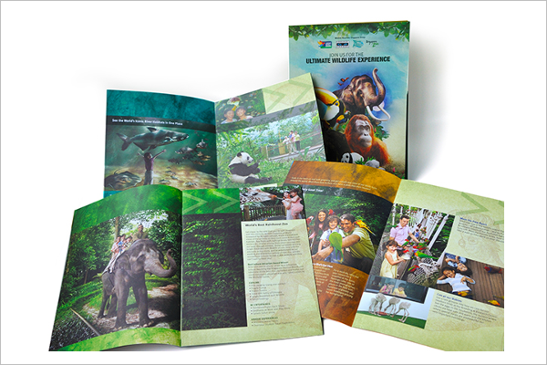 Free Zoo Brochure Design